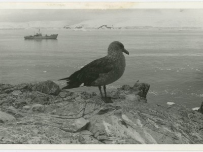 Filmación de documental en la Antártica.